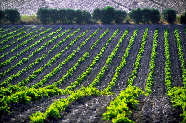argiolas Sardegna