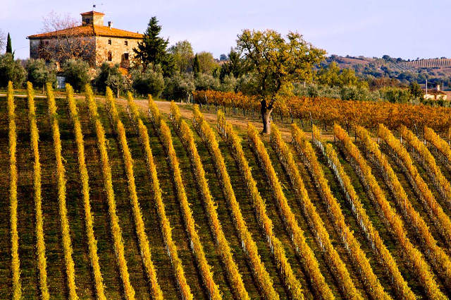 tuscany vineyard Italy wine