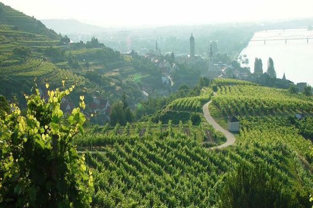 Niederösterreich Vineyards