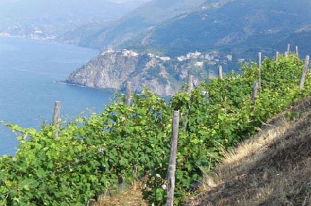 Liguria le cinque terre