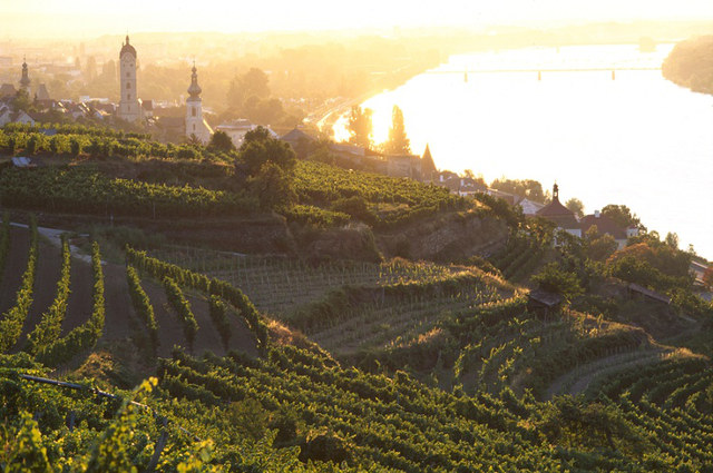 Austria Lower Austria Wachau wine landscape autum harvest danube river