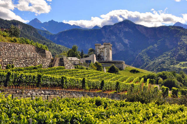 Valle d'Aosta Vineyards