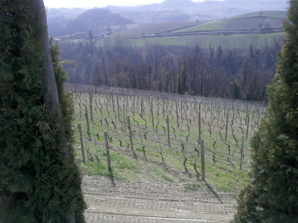 Trip to Piemont vineyard