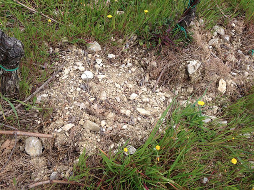 galestro soil chianti